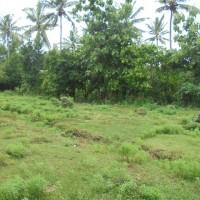 Mandiri (24-10)a : 1 (satu) bidang Tanah SHM No. 371 luas 3000 terletak di Ds. Celukan Bawang, Kec. Gerokgak, Kab. Buleleng