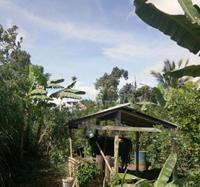 BRI Bangli : Sebidang tanah SHM No. 367 Luas 2790 m2 di Ds Tiga Kec Susut Kab Bangli