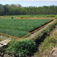 PNM Prob: sebidang tanah luas 5.816m2, terletak di Desa Brumbungan, Kec.Maron Kabupaten Probolinggo