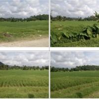 BPD Sumbar (b) Sebidang tanah pertanian sesuai SHMNo. 1691, LT 10.000m2 terletak di Kel Sungai Sapih Kec.Kuranji Kota Padang