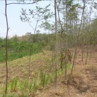 Tanah pertanian SHM No. 09 LT. 11.545 M2 terletak di Ds. Kedungjajang, Kec. Kedungjajang, Kab. Lumajang