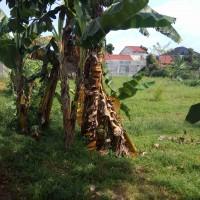 BRI BOGOR DEWI SARTIKA = SHM 3806 LT 625 di RT 01 RW 02, Situ Cilodong, Kelurahan/Desa Kalibaru, Kecamatan Cilodong, Kota Depok