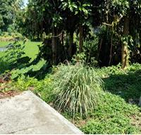 [BPRSAAC] Sebidang tanah luas 116 m2, SHM No.00479, Lokasi di Kel Payolansek, Kec Payakumbuh Barat