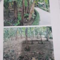 BRI Gombong: sebidang tanah, SHM No.00447 Luas 267 m2 di Desa Klepusanggar, Kec Sruweng, Kab Kebumen