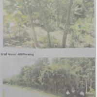 PUPN : 2 (dua) bidang tanah berikut segala sesuatu di atasnya luas 23.780 m2, Desa Guradog, Kecamatan Maja, Lebak