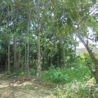 1 f. BNI Kanwil BJM melelang Sebidang tanah kosong SHM No. 1708  seluas 4.132 m2, Desa Sungai Danau, Kec. Satui, Kab. Kotabaru