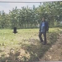 PNM Pati: Tanah SHM 516 lt. 1688 m2 di Desa Dringo, Kec Todanan, Kab Blora