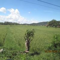 Bank Danamon: Lot. 1. Sebidang tanah kebun luas 6.493 m2, SHM. No. 00035, terletak di Kec. Walenrang, Kabupaten Luwu