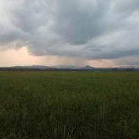 BRI Kolaka : 2. Tanah luas 20.000 M2, SHM. No. 1119/Wunggoloko an. Andah di Desa Wunggoloko Kab.Koltim