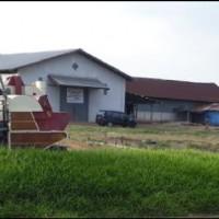 2 bidang tanah luas 15.000 m2 berikut penggilingan padi, gudang dan rumah tinggal di Desa Sumber Harapan, Kec Tanah Miring, Kab Merauke