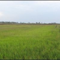 1 bidang tanah pertanian luas 7.500 m2 di Desa/Kelurahan Sumber Harapan, Kecamatan Tanah Miring, Kabupaten Merauke