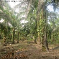 BRI SIBUHUAN-16. 1 (satu) bidang tanah SHM seluas 19.860m2 terletak di Ds/Kel.Pagaran Mompang, Kec.Lubuk Barumun, Kab.Padang Lawas