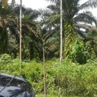 [BRISP4] 2c. Sebidang Tanah berikut turutannya, SHM. No. 547, di Muara Kiawai,  Nagari Muara Kiawai , Kecamatan Gunung Tuleh