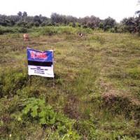 1 bidang tanah kosong luas 10.000 m2 di Desa Arso III, Kecamatan Arso, Kabupaten Keerom