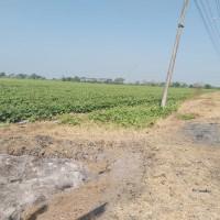 PT BRI Khusus: tanah kosong SHM No. 246 luas 6.150 m2 di Desa Cangkring Rembang, Kec Karanganyar, Kab Demak