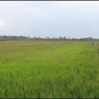 1 bidang tanah kosong luas 7.500 m2 di Desa/Kelurahan Sumber Harapan, Kecamatan Tanah Miring, Kabupaten Merauke