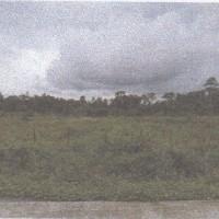 1 bidang tanah kosong luas 7.500 m2 di Kampung Timika Jaya, Distrik Mimika Baru, Kabupaten Mimika
