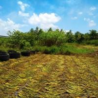 CIMB Niaga, 6 bidang tanah dijual 1 paket berikut turutan diatasnya di Pleret, Panjatan, Kuloprogo, DIY