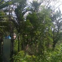 [BPRGebu] 3. Sebidang tanah pertanian seluas 1.025 m2, SHM No.2209, Jorong IV Surabayo Kenagarian lubuk Basung Kec. Lubuk Basung Kab. Agam