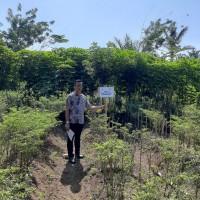 [BPRGebu] 1. Sebidang tanah pertanian seluas 365 M2, SHM No.2429, di Jorong V Sei.Jaring Nagari Lubuk Basung  Kec. Lubuk Basung Kab.Agam