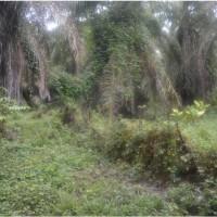 1 bidang tanah kosoang luas 10.000 m2 di Desa Dukwia, Kecamatan Arso Barat, Kabupaten Keerom