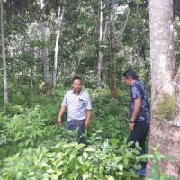 BTPN Linggau: Tanah kosong/sawah luas 20.989 M2, SHM No. 100, terletak di Desa Pagar Agung, Pseksu, Lahat, Sumsel