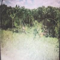 1 bidang tanah kosong luas 7.500 m2 di Desa Jaifuri, Kecamatan Skanto, Kabupaten Keerom
