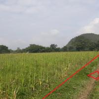 [PNM] 3. Sebidang Tanah seluas 3.360 M² beserta turutan, SHM No. 814, Nagari Taram Kecamatan Harau Kabupaten Lima Puluh Kota