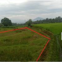 [PNM] 1. Sebidang Tanah Sawah seluas 2.790 M² SHM No. 144, di Nagari Sikabu Kabu Tanjung Haro Padang Panjang Kec Luak Kab Lima Puluh Ko