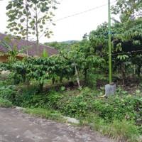 BRI Genteng : SHM No. 1430 a.n. Juhairiyah, Luas 1665 M2 terletak di Desa/Kel. Banyuanyar, Kec. Kalibaru, Kab. Banyuwangi