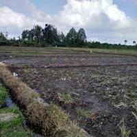BRI Genteng : SHM No. 02179 a.n. Eko Wahyudi, Luas 1739 M2 terletak di Desa/Kel. Cluring, Kec. Cluring, Kab. Banyuwangi