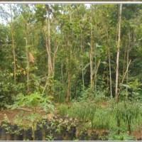 (PNM PWT) tanah,  SHM no 187,LT 879m2, di Ds Plompong, kec Sirampog, kab Brebes
