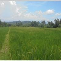(PNM PWT)tanah sawah,  SHM no 329 LT 3575m2,  di Ds Pengarasan,  kec Bantarkawung, kab Brebes