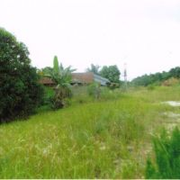 BRI Syariah PKU - Seidang tanah kebun seluas 17.788 M2 SHM No. 231 di Kel Tanjung Leban, Kec Bukit Batu, Kab Bengkalis, Provinsi Riau
