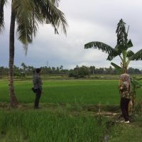(BRI Watansoppeng) tanah sawah (SHM No.1809), Luas tanah 2.674 m2, di Pajalesang, Kel/Desa Pajalesang, Kab. Soppeng