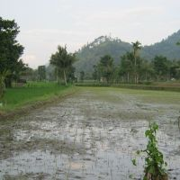 BRI Bondowoso 2b) Sebidang tanah seluas 2.753 m2 berupa SHM No. 650 terletak di Desa Maskuning Wetan, Kecamatan Pujer, Kabupaten Bondowoso