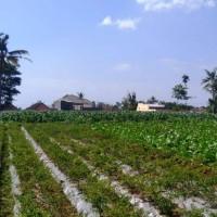 BRI Bondowoso 1) Sebidang tanah seluas 2.724 m2 berupa SHM No. 258 terletak di Desa Sumbersari, Kecamatan Maesan, Kabupaten Bondowoso