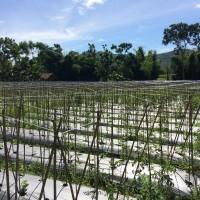BRI Bondowoso 2c) Sebidang tanah seluas 8.940 m2 berupa SHM No. 151 terletak di Desa Maskuning Kulon, Kecamatan Pujer, Kabupaten Bondowoso
