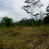 PN. Mungkid: Tanah SHM No. (525;254;255) luas 11.980 m2, di Desa Tempurejo, Kec. Tempuran, Kab. magelang