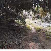 BNI Rantau Prapat : g. Sebidang tanah seluas 8.668 m2 berikut tanaman diatasnya dengan Sertipikat Hak MilikNo. 2207 di Desa Binanga Dua