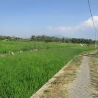 BNI Malang: Sebidang tanah SHM No.2028 luas 1750 m2 di Ds/Kel.Banjarejo Kec.Taman Kota Madiun