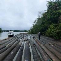 kayu bulat rimba campuran 10 batang sitaan polres Barito Utara