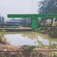 KSPPS Yaumi:Tanah SHM 417 Lt.780 m2 di Ds Mustokoharjo,Kec Pati,Kab Pati