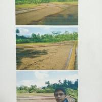 BRI Banjarngr: Sebidang tanah, SHM No.1789, luas 2.147 m2, di Desa Purwareja, Kecamatan Purwareja Klampok, Kabupaten Banjarnegara