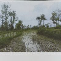 PT. Sarana NTB Ventura: Sebidang tanah pertanian, SHM No.223, Luas 9.420 M2, di Ds. Saba, Janapria, Lombok Tengah, NTB