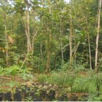 [PNM PWT] tanah, SHM No. 000187, LT 879m2, di Ds Plompong, Kec Sirampog, Kab Brebes