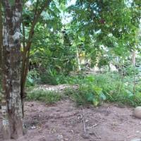 PN Ranai Kelas II - 1) Sebidang tanah perumahan dengan luas ± 300 m2 di Kabupaten Natuna