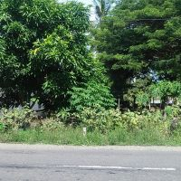 PT. PNM: Sebidang tanah luas 1.017m2, sesuai SHM No. 37, terletak di Kec. Kamandre, Kabupaten Luwu