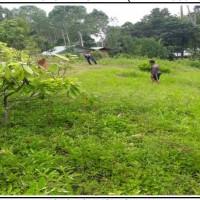 PT. PNM: Sebidang tanah luas 801 m2, sesuai SHM No. 167, terletak di Kec. Rantetayo, Kabupaten Tana Toraja