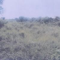 7 bidang tanah kosong dalam 1 hamparan total luas 100.340 m2, terletak di Desa Karang Karangan, Kec. Bua, Kab Luwu.